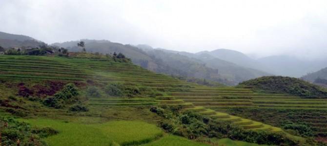 J18 : Les rizieres de Sapa